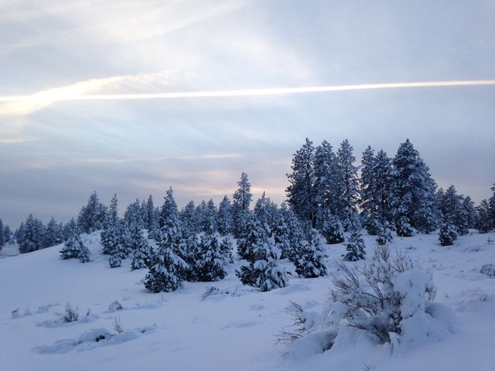 snowy forest at dusk - ATimms