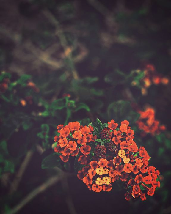 Outdoors flower bomb - Subliminal Imagery