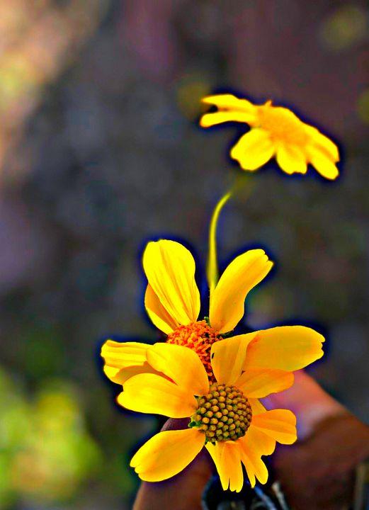 Up close - Subliminal Imagery