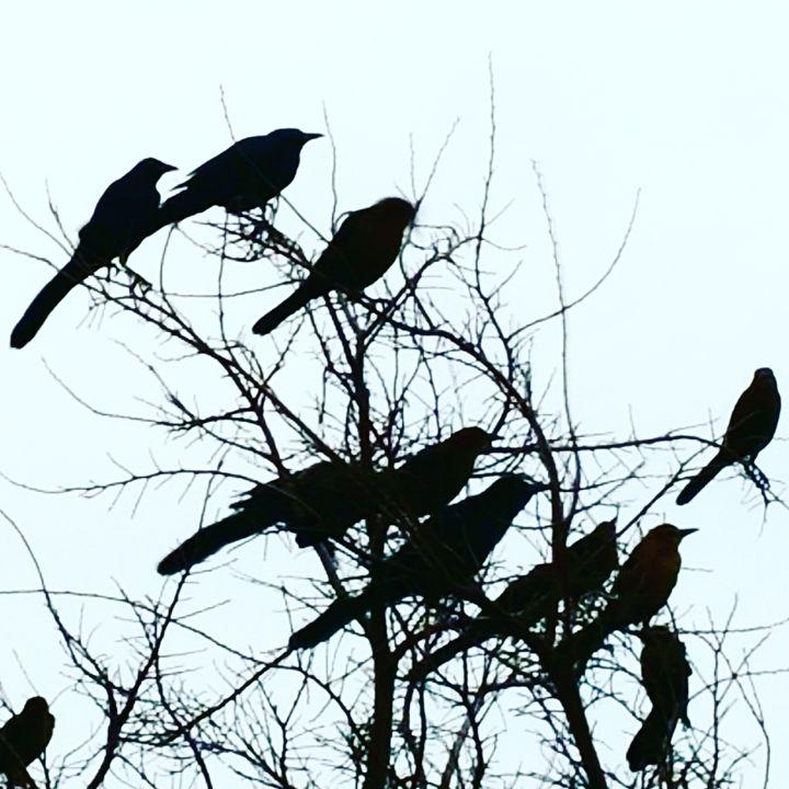 Black Birds - APONI LUNA