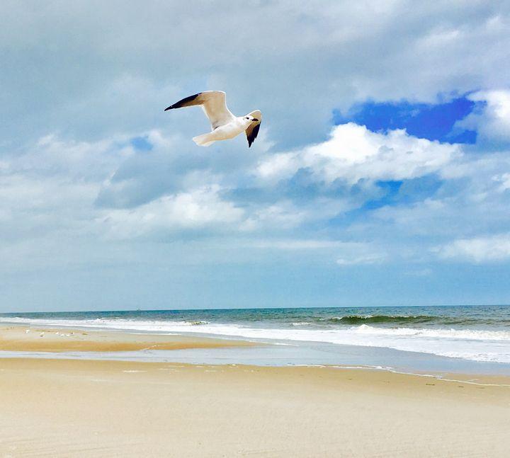 Wings of Island - Jo Jones