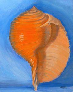 Murax Seashell