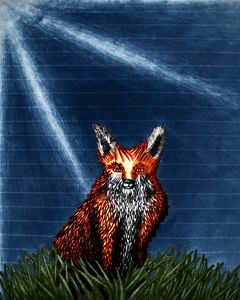 Red Fox (photoshopped)