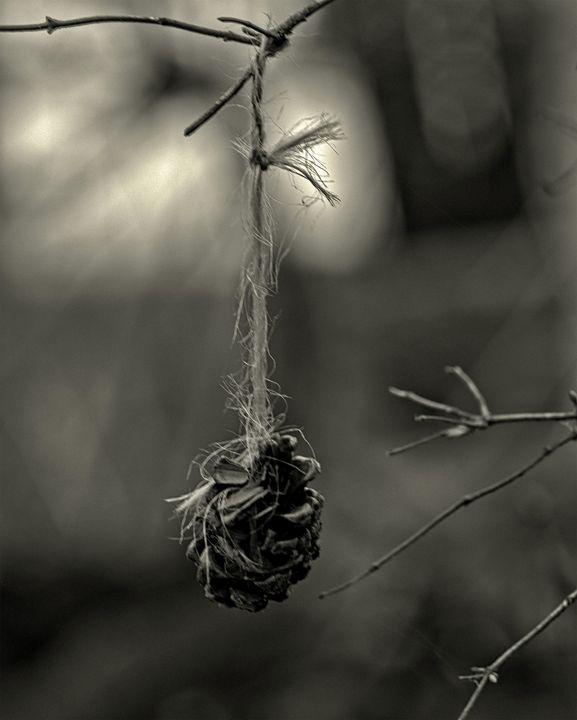 Decorative Nature - Staeble Studio A