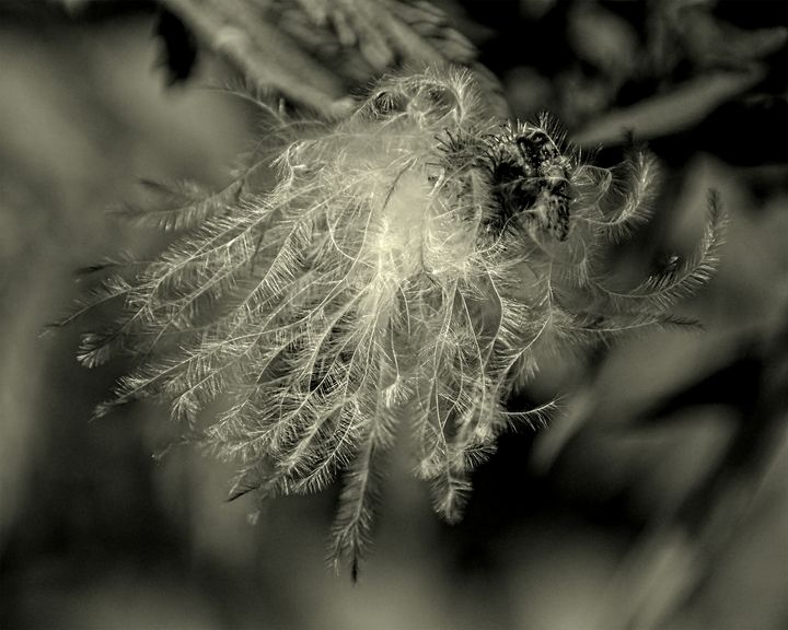 Feathery Apparition - Staeble Studio A