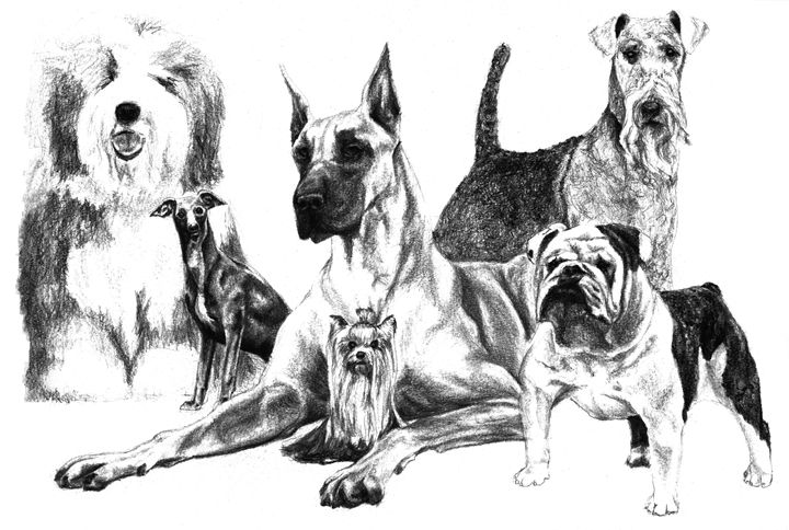 DOGS! All Kinds - Artistic Expressions