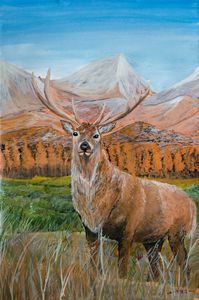 The Red deer stag in the grassland