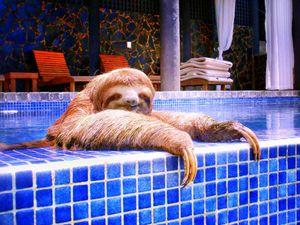 Lola Taking a Dip