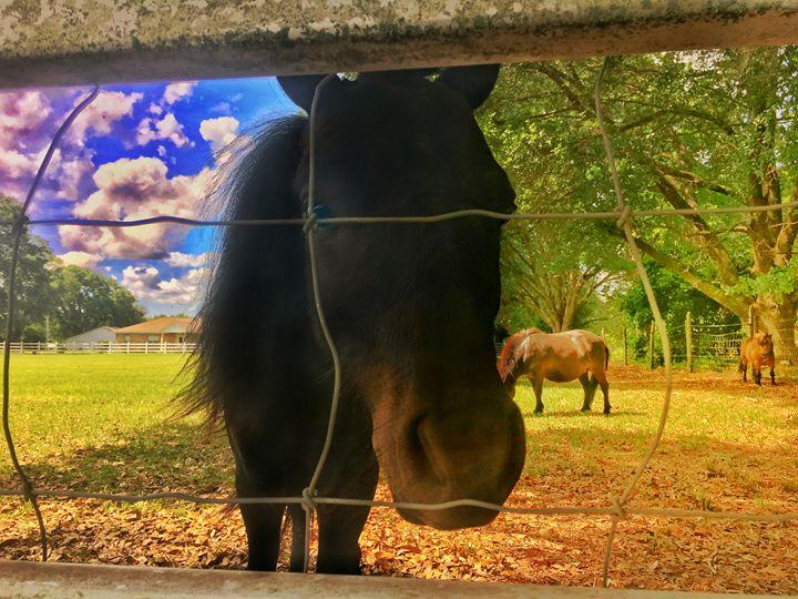 Dark Horse Miniature - BenjamIndestrucible Design House