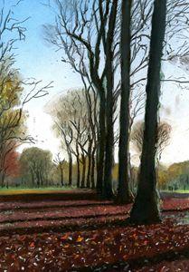 Winter Trees in Hyde Park, London