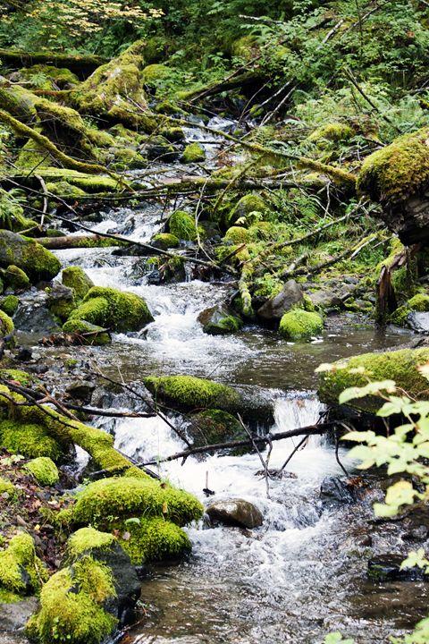 Covell Creek - Washington Artwork