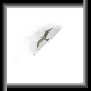 Stenciled Gull 2/2