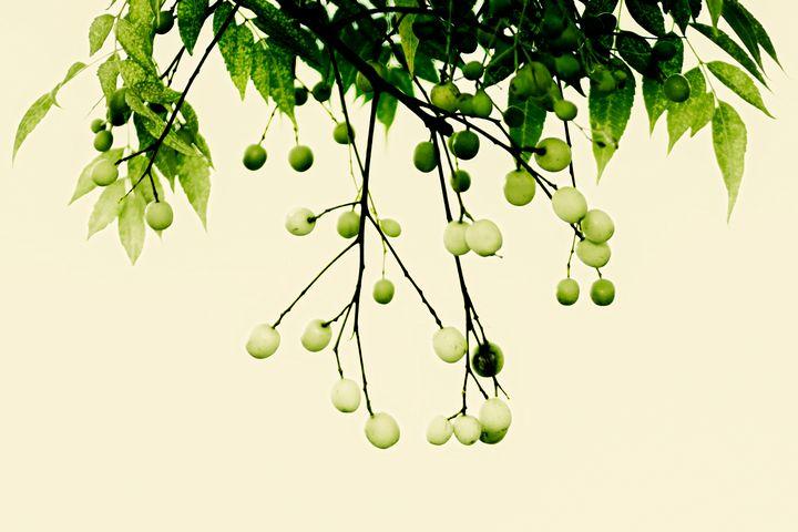Welcome Spring! - Prabhu Tiwari