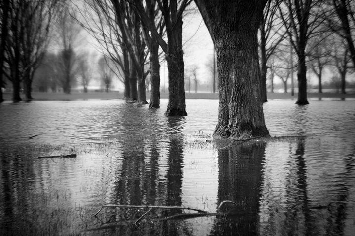 Flood - Danielle Meador