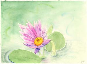 Lotus in the Muddy Waters
