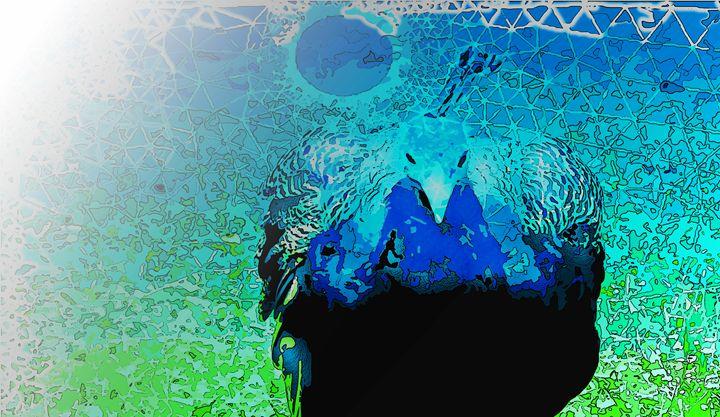 Peacock posterus - Magdalena Ziemak