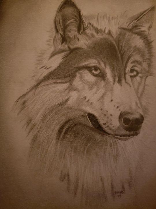 Wolf portrait - Into the Wild