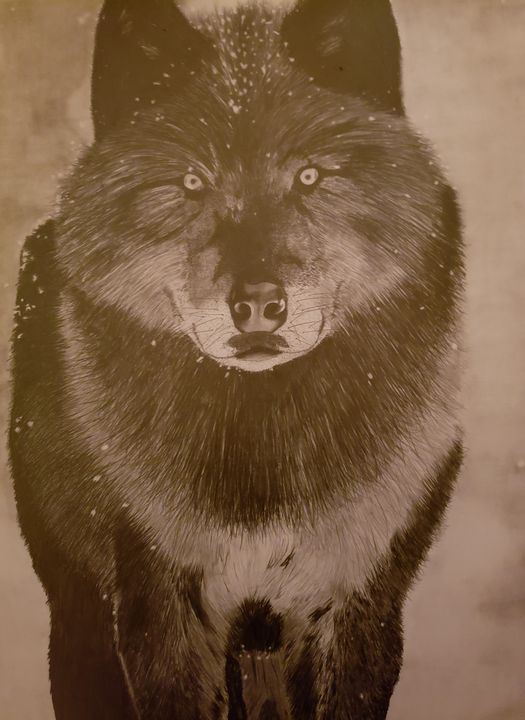 Black Wolf - Into the Wild