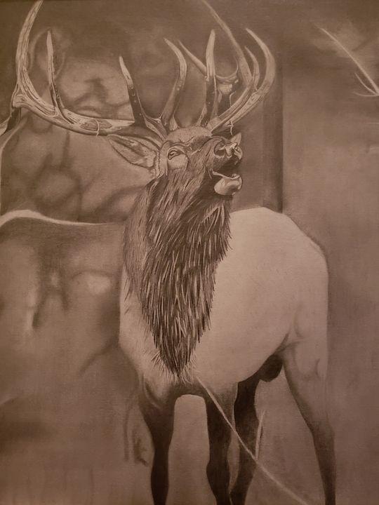 Bull Elk - Into the Wild
