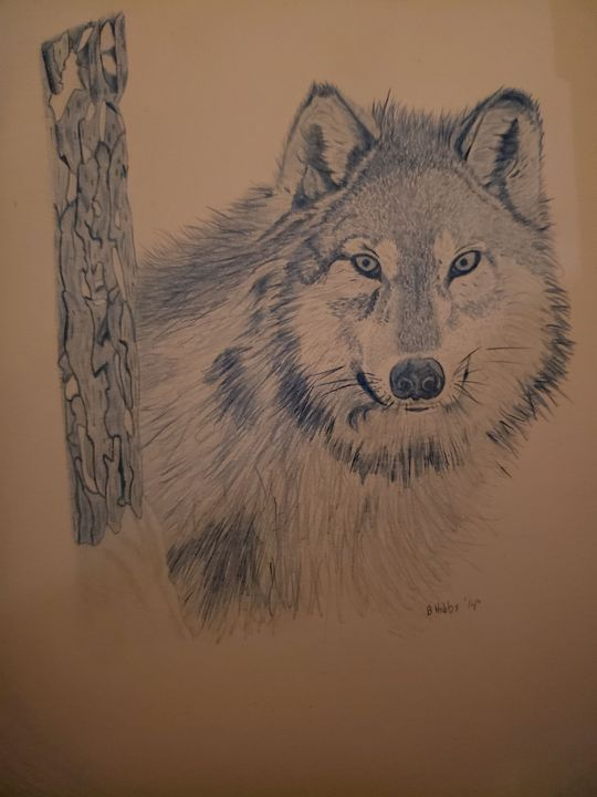 Blue Wolf - Into the Wild