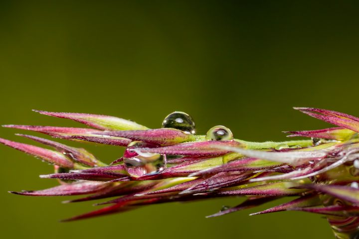 Droplets - Photography