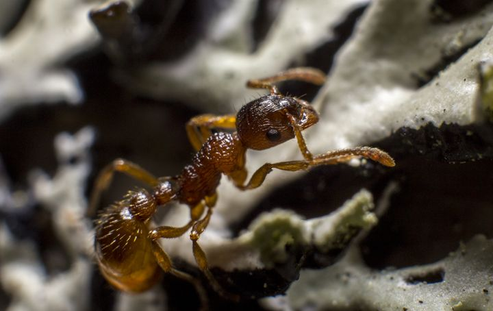 Ant - Photography