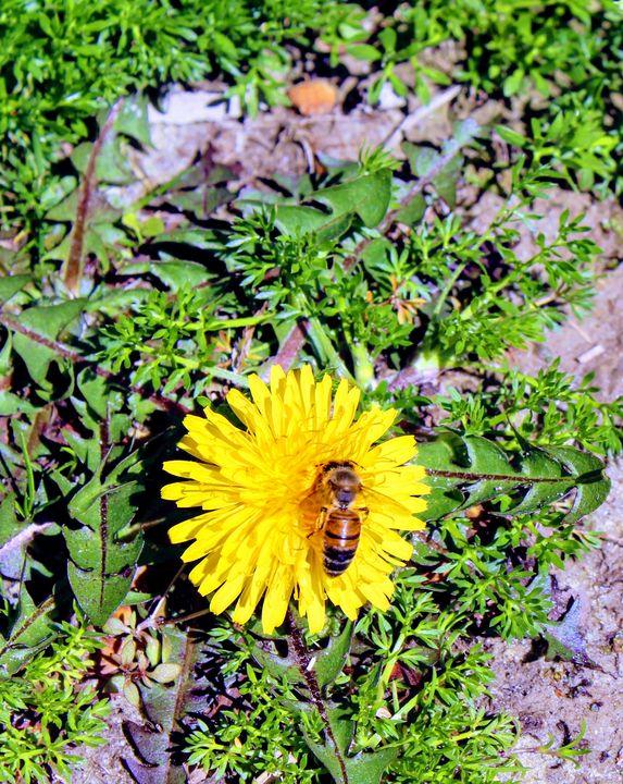 Be My Honeybee - Artistrology