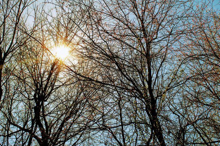 Spring Sunlight - Artistrology