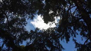 Nephelococcygia through trees
