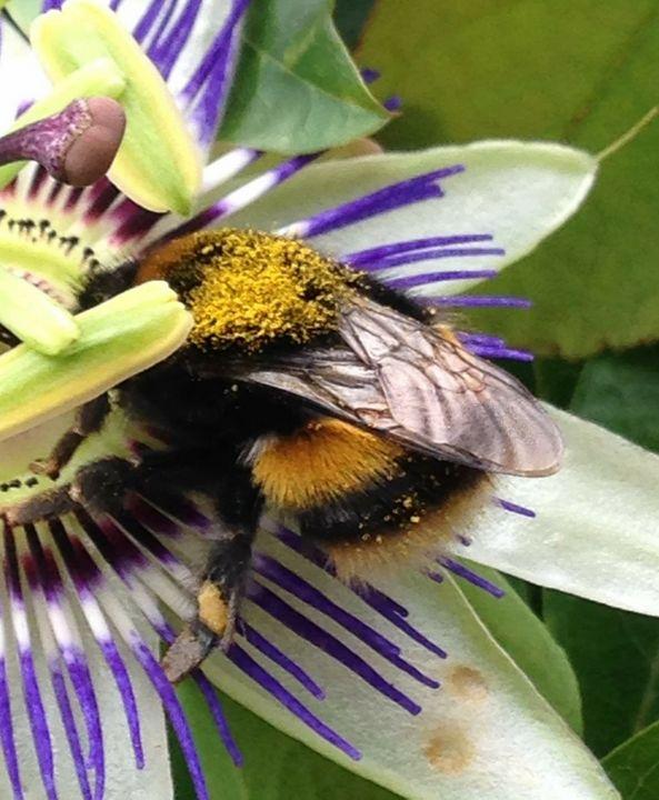 Bumblebee - Jodie