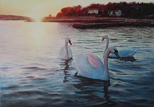 Swans Dancing
