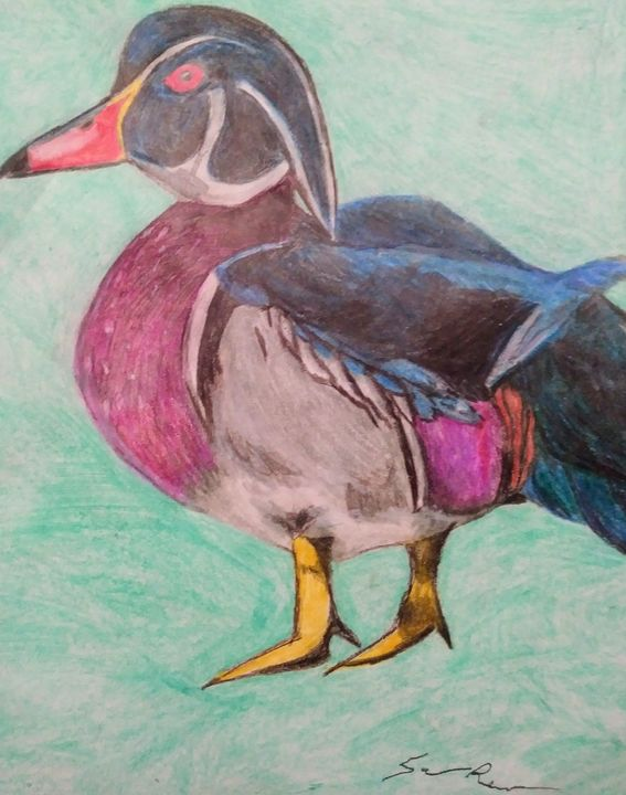 Wood Duck - Sarah Beth Burke