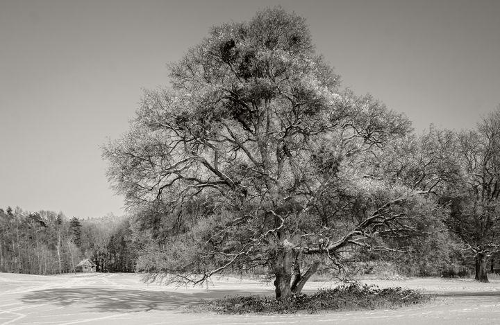 Winter Tree 2 - OtaPhotoTours