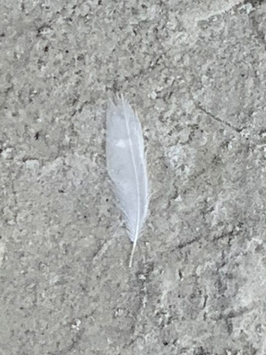 Delicate White Feather on Beach - Sunshine's Art Gallery