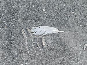 White Feather Beach Print