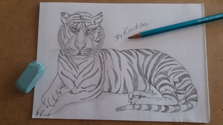Sitting Tiger - Kanchan's