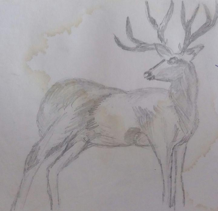 Deer - Kanchan's