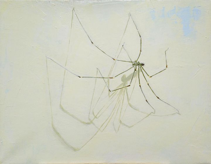 The spider above my bed - S O O N