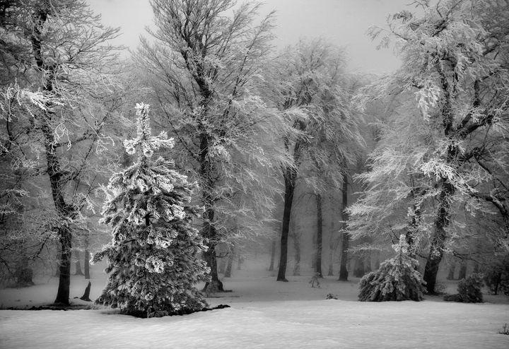 The passion of trees - Ali shokri