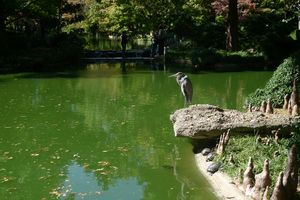 japanese garden in the lake