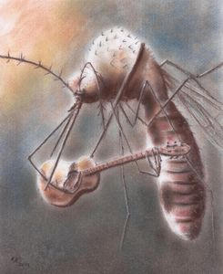Canção do Mosquito (Mosquito's Song)