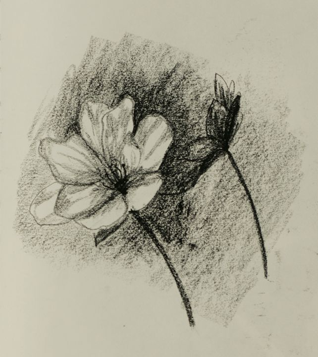 Charcoal Flower - AmarisMorn Art