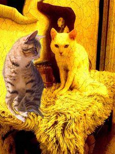 Tirde cats - Pagriellart