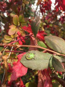Green bug - Pagriellart
