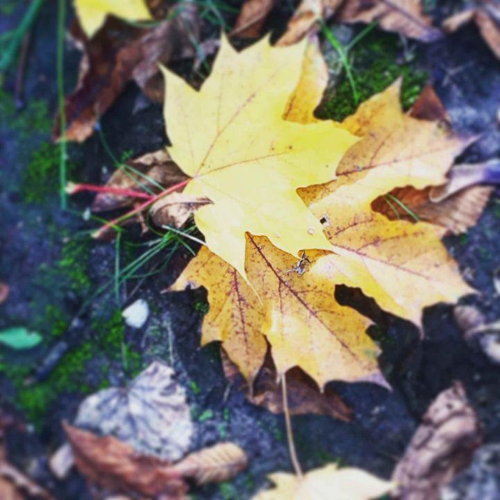 Autumn fall - Pagriellart