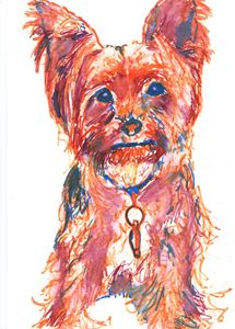 Yorkshire terrier in Orange tones