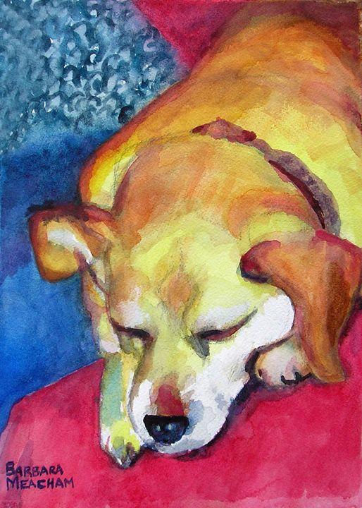 Mazey the Dog - Barbara J Meacham