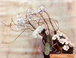 Museum Orchids