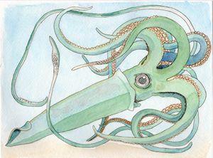 Gigantic squid