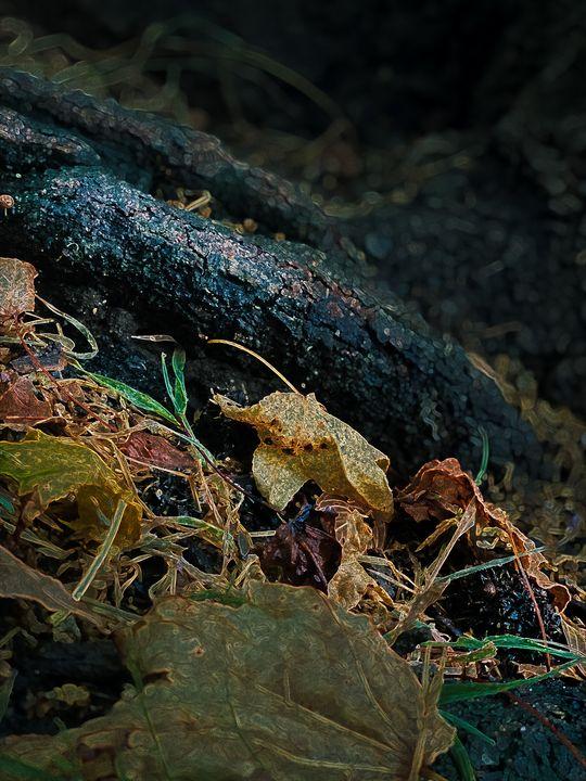 Autumn Leaves - BlazingBlu Arts & Photography